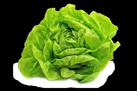 Trocadero lettuce image